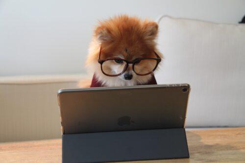コンピューター学習の賢そうな犬
