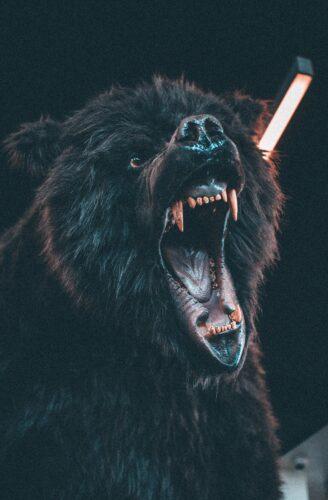 怒りの感情をあらわに威嚇をする熊